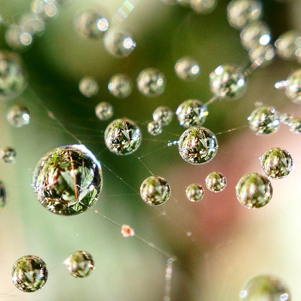Other worldly dewdrops