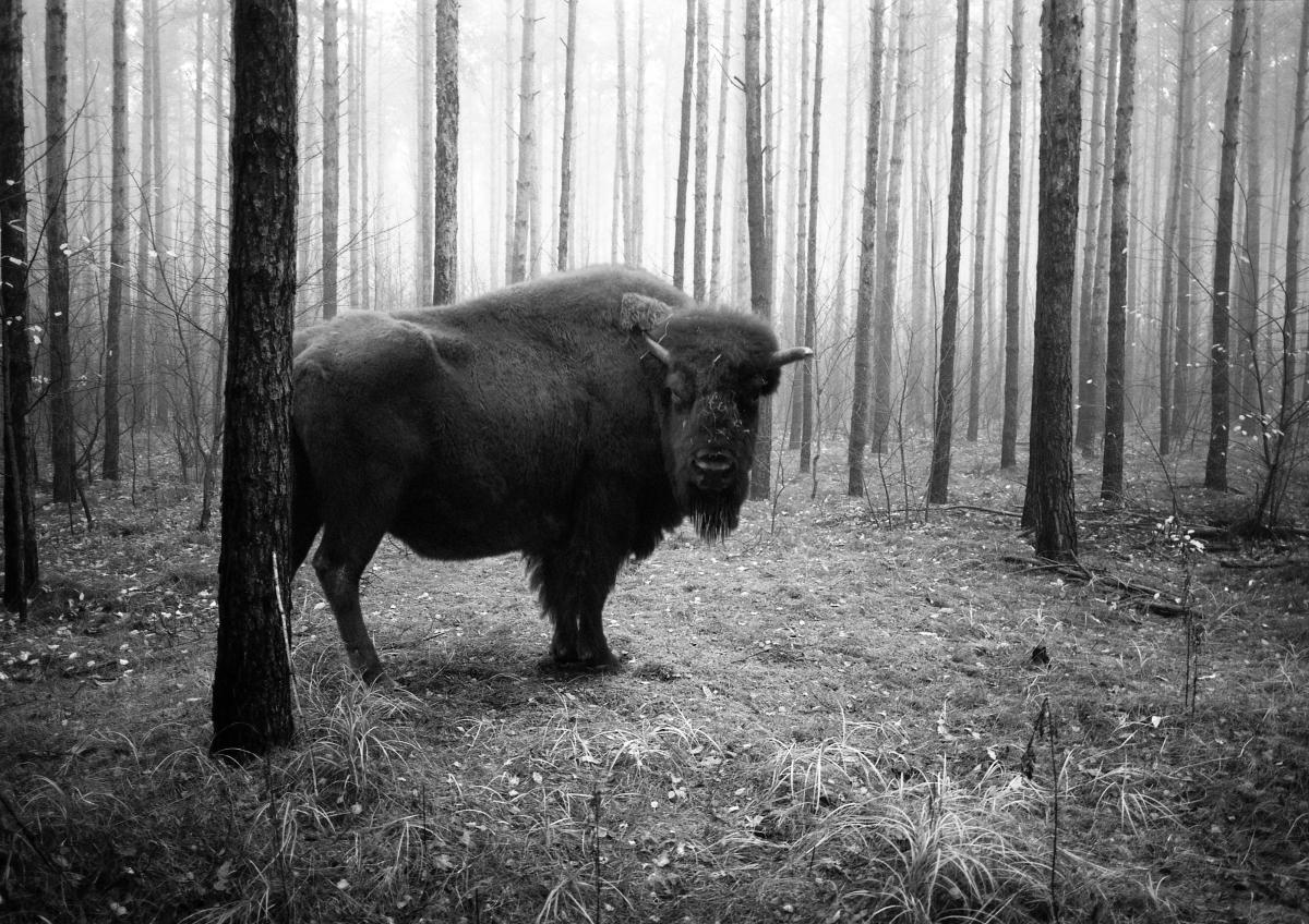 'tierwald#9' by Frank Machalowski