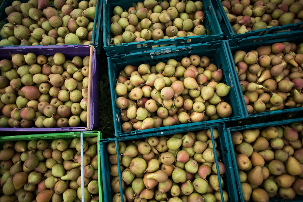 'Pears rejected by supermarkets due to cosmetic standards' by Chris King