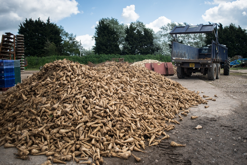 'Tonnes of parsnips unsold because of low price offered by supermarkets' by Chris King