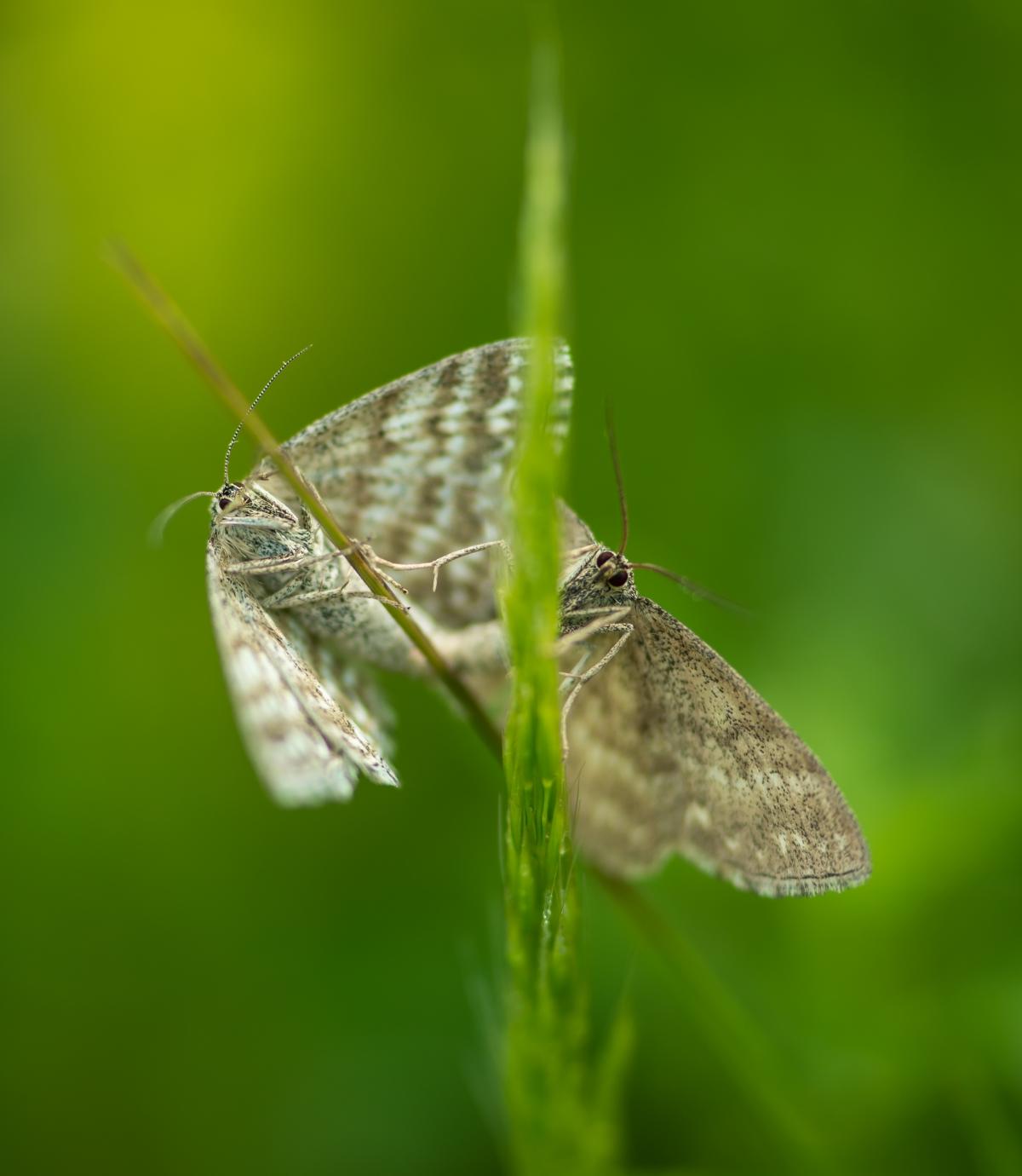 Love by butterflies
