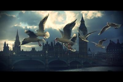 Big Ben´s Birds