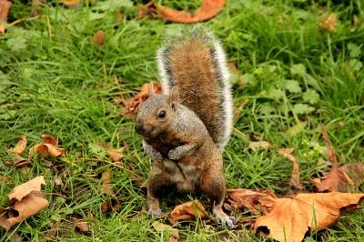 A Smiley Squirrel?
