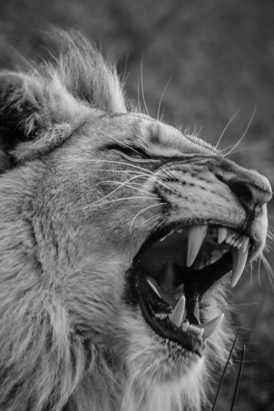 A great yawn!