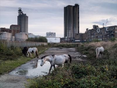 Factory Horses