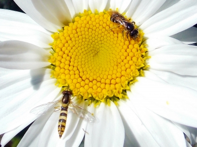 insects on the flower