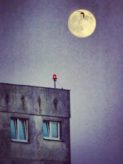 Nighthawk of modernism