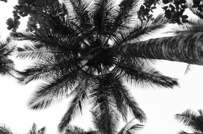 Beautiful shape in coconut tree