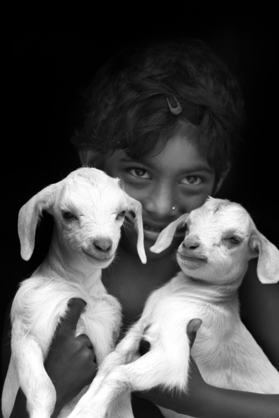 little girl with two goat
