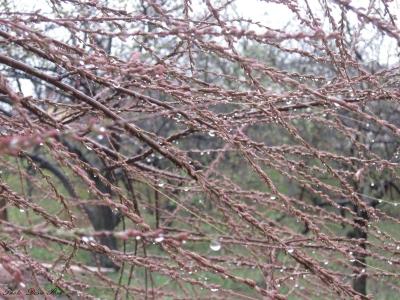 Spring Rainy Day 24.03.'14. ; )