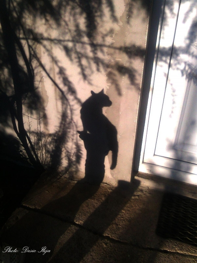The shadow of my Cat. 12.05.'14. ; )