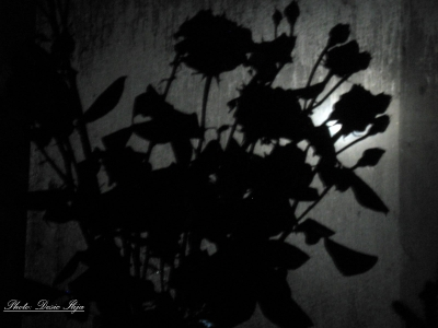 Cold Night, Roses in the Window, and Moonrise. 18.05.'14. ; )