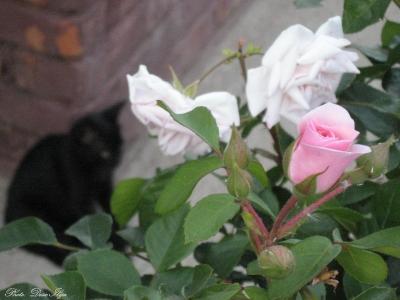 Roses ; )