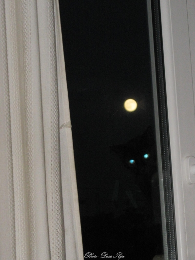 Full Moon, and My Kitty in the Window... 12.06.'14. ;D