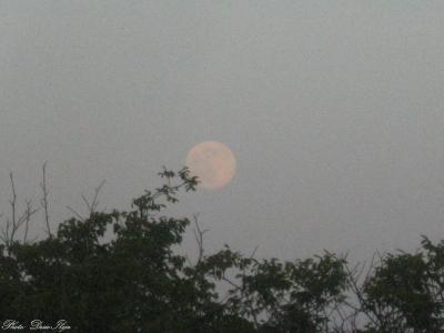 Moonrise. 12.06.'14. ; )