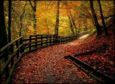Calderglen Woods