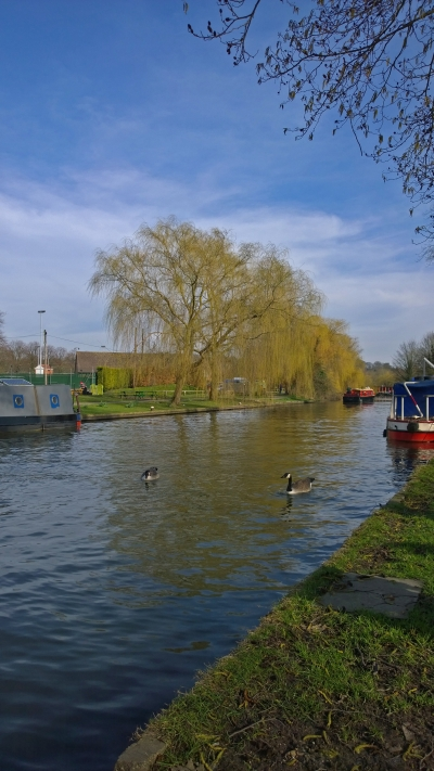 Towpath with ducks