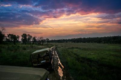 Sunset in the bushland
