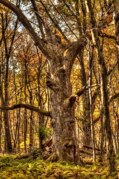 Huge tree HDR