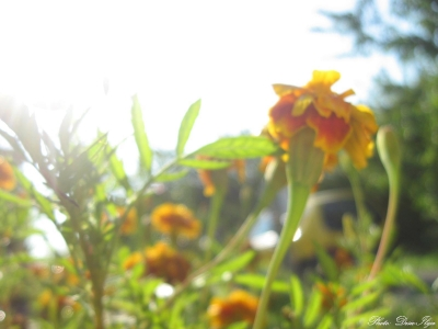Morning Sunshine, and Flower... 24.07.'14. ; )