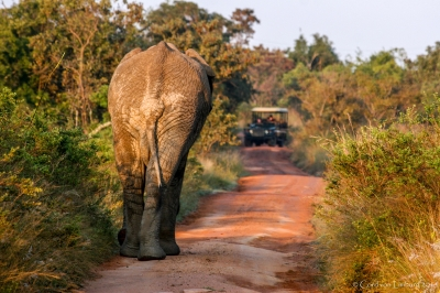 My Way ... - Elephant in Krueger National Park, South Africa