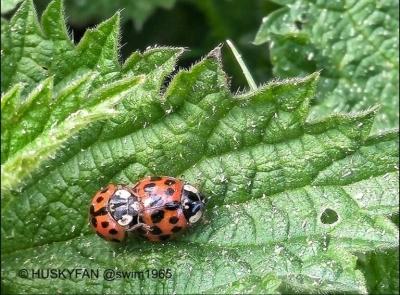 Naughty Ladybugs