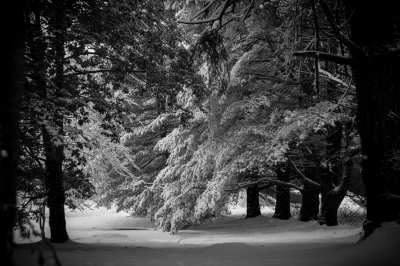 Snow on Trees