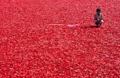 Red Chillies and the Boy
