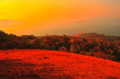 Fiery Colours in Nature