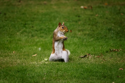 The Greedy Squirrel