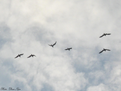 A Flock of Seagulls on the Sky... 01.08.'14. ; )