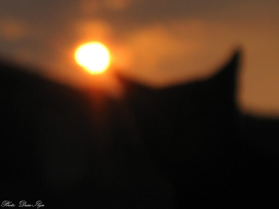 Sunrise and my Cat on the Window. 16.08.'14. ; )