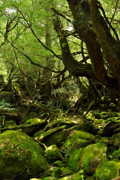 Cooling Hiking in the Summer_Yakushima