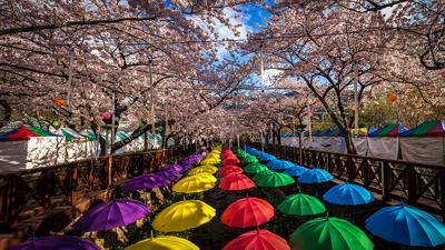 Parasols and blossoms