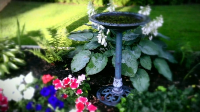 Flowers and Birdbath
