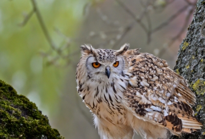 Tower control, this is Eagle Owl ready for take off!!