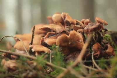 Forestology - Morning walk