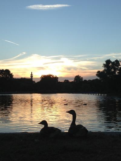 Relaxing Duck's in Regent's Park