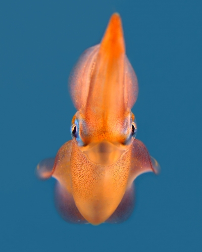 Squid Portrait