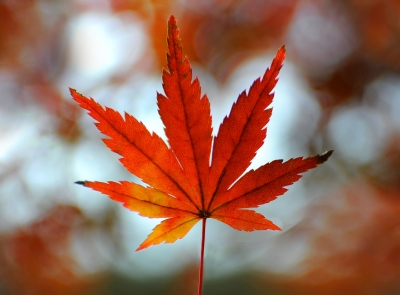 An Autumn Leaves