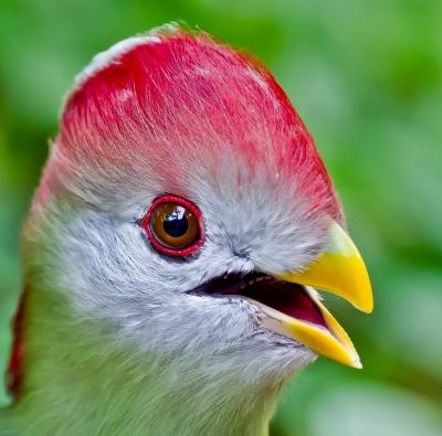 Who's a pretty bird then?