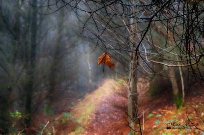 The last days of Autumn