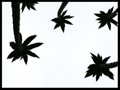 Abstract Silhouette Against Grey Sky 1