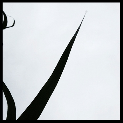 Abstract Silhouette Against Grey Sky 2