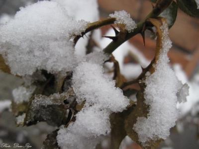 #Snow :)