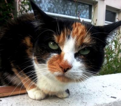 Feline intensity