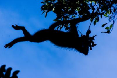 Jungle Trapeze