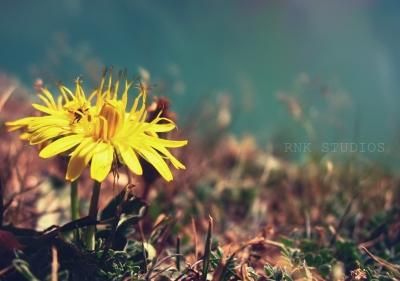 Alone Flower At Lake