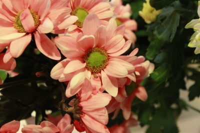 Spectrum of true colors of flowers