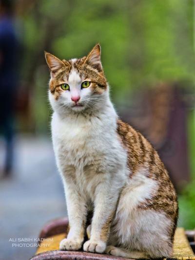 cat 2015